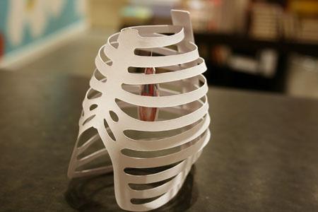 ribcage-heart-001